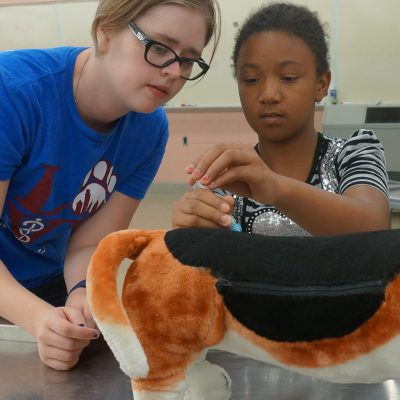 MSU College of Veterinary Medicine Day Camp: Educating and ...
