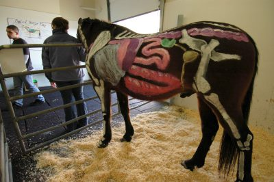 vet-a-visit-painted-horse