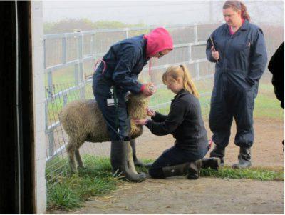 veterinary technician training in Grand Junction CO