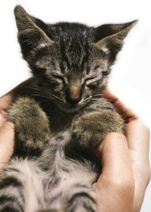 12 Kitten