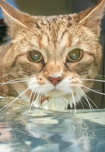 02 Cat Water Treadmill