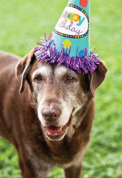 02 Dog Birthday Hat