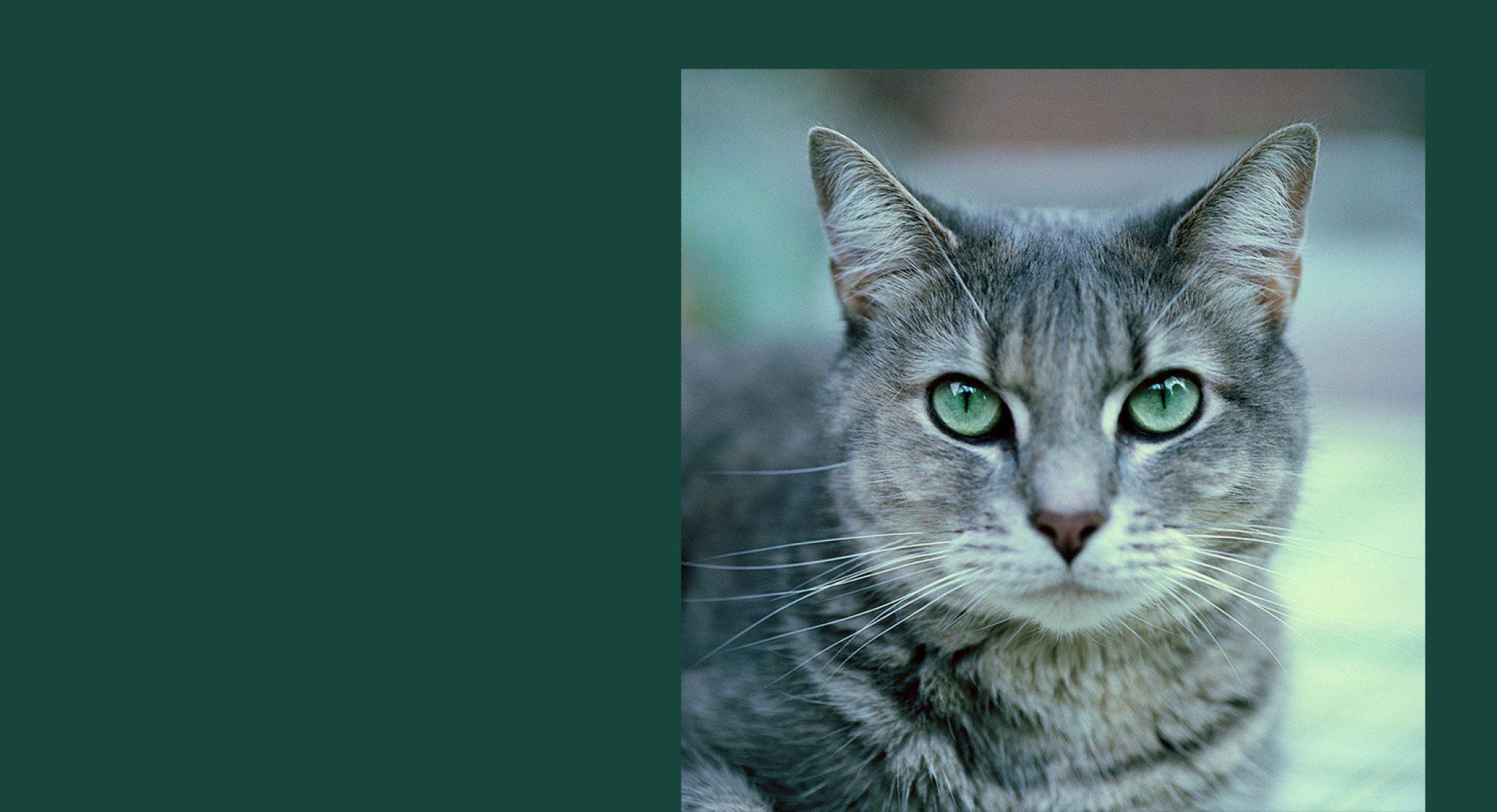 Vmc Cat Hero Image