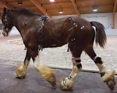 Horse Walking In Mcphail Lab