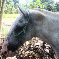 Horse Condition