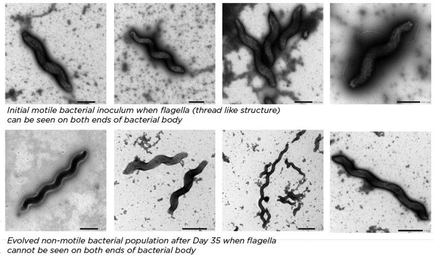 Campylobacter Blog Top Image