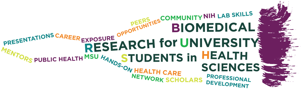 Undergraduate Summer Research Program | College of