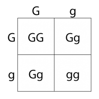 Valberg-genetic-square1