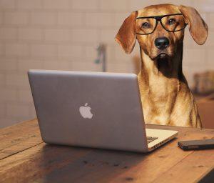 Dog 2983021 1920