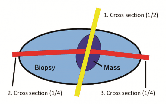 Standard Trimming Method Dorsal View