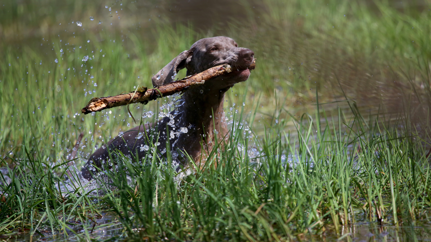 Dog In Water Nathalie Spehner Unsplash