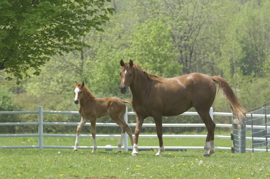 Horse And Foal University Communications